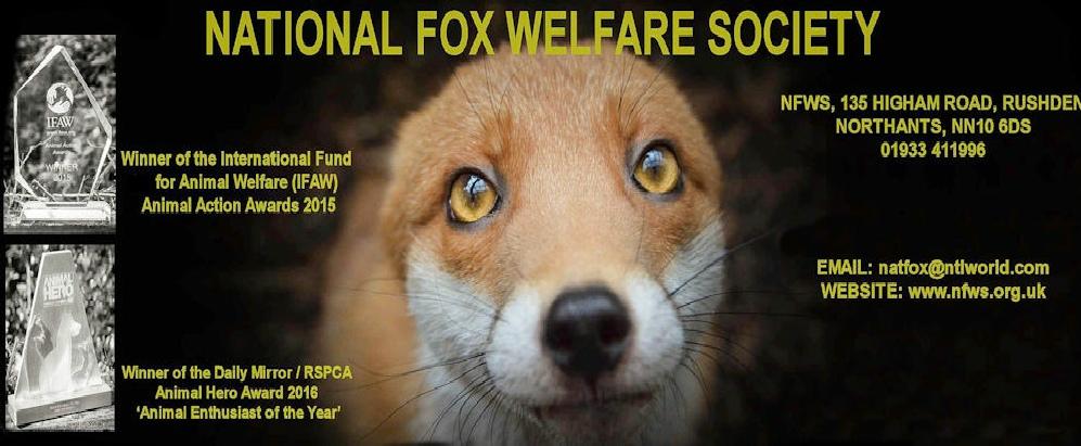 Fox Mange- Free Mange Treatment-Canine Mange-Sarcoptic Mange